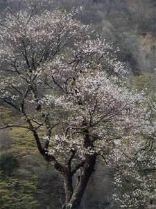 桜左の枝花.jpg